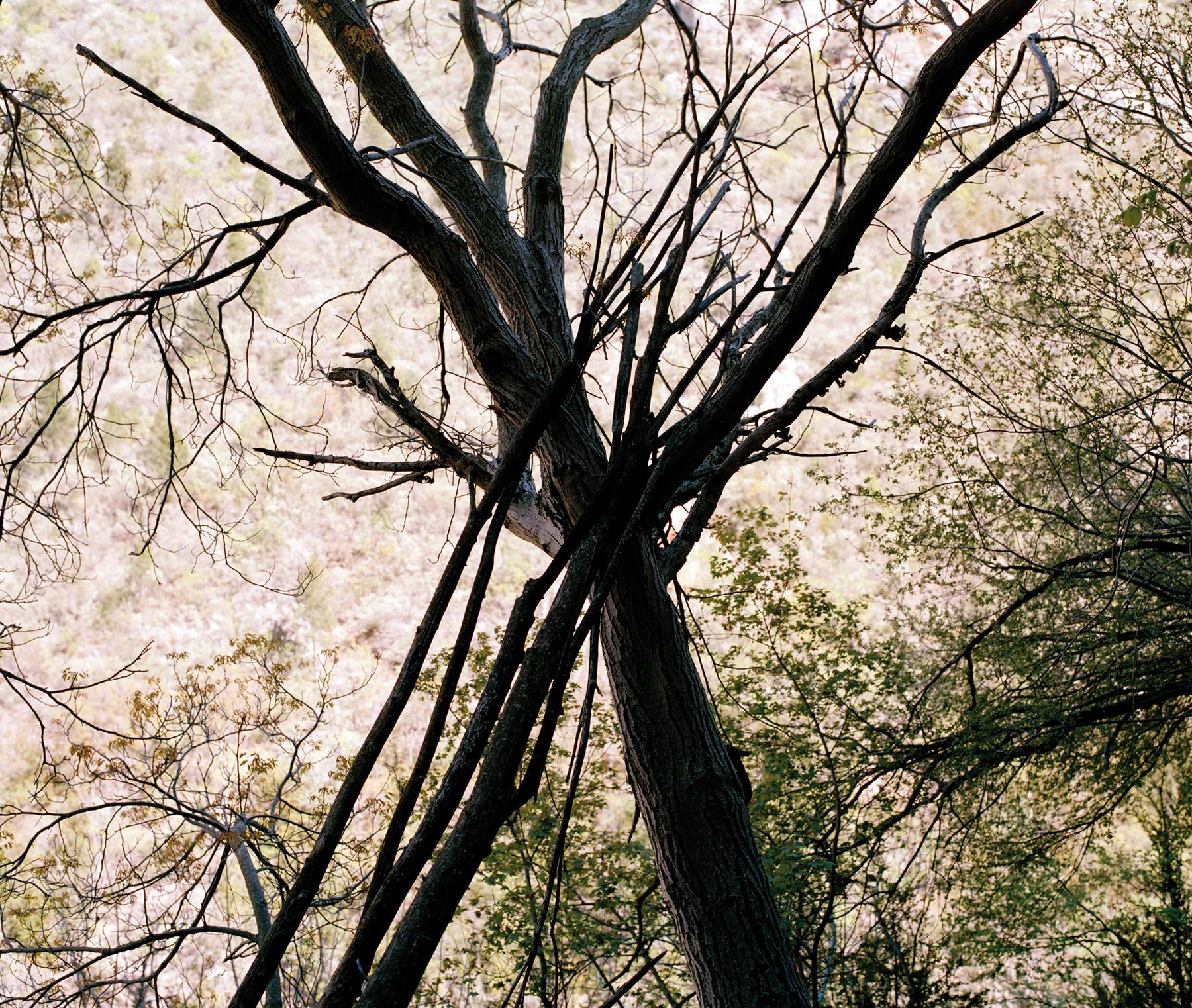 Creu-de-branques-2010
