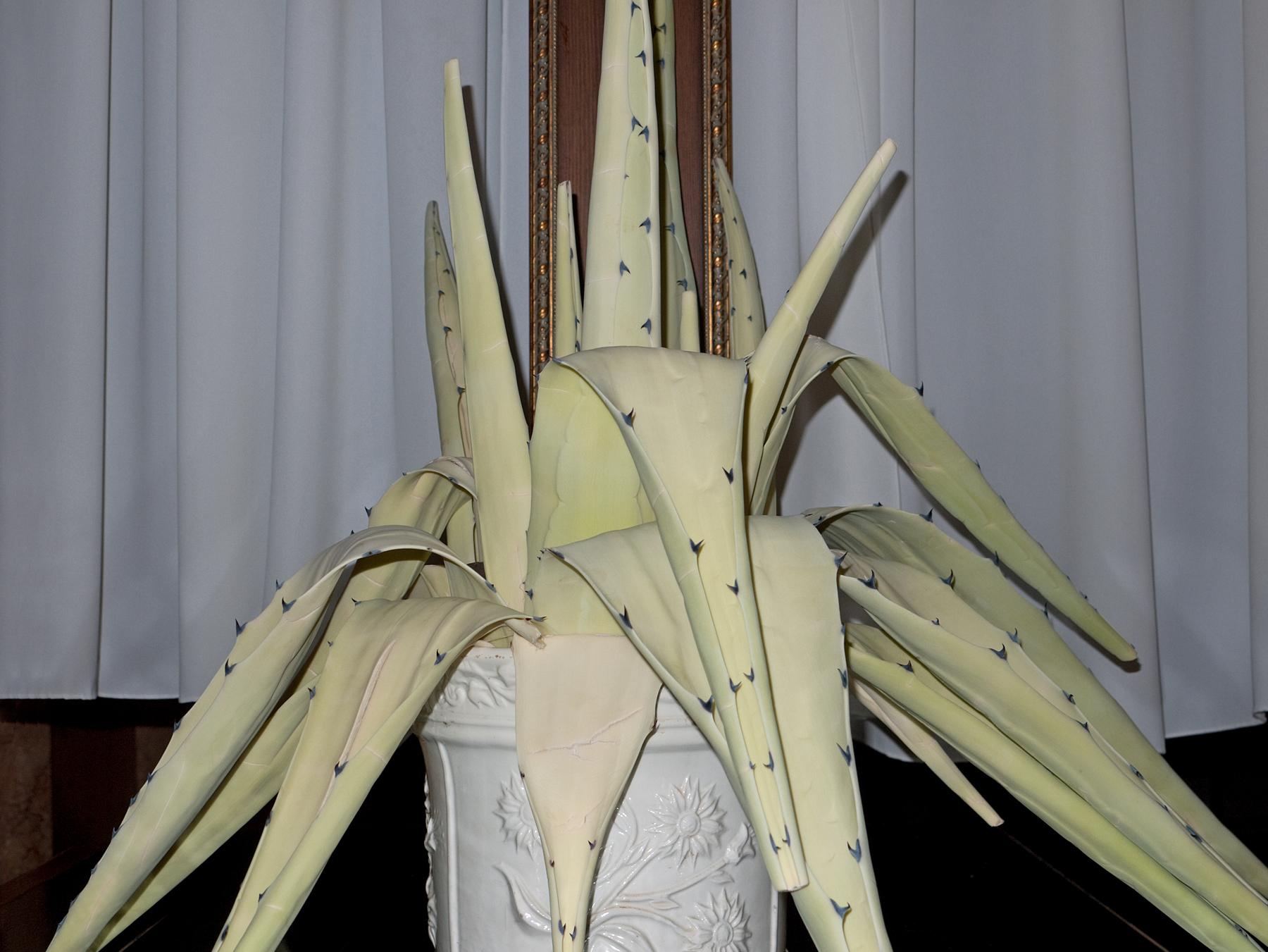 Son-cactus,-son-espines